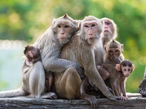 monkeys cuddling together